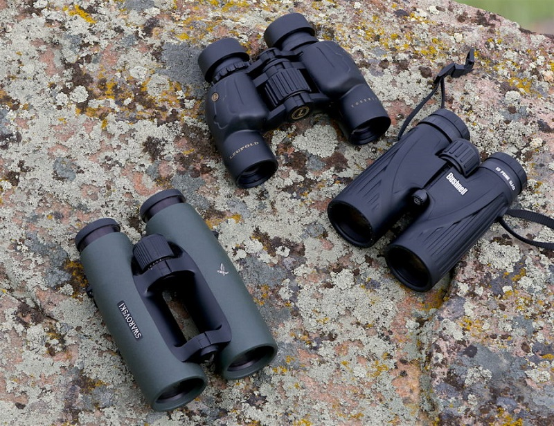 Watching Birds Up Close – These Are The Best Birding Binoculars